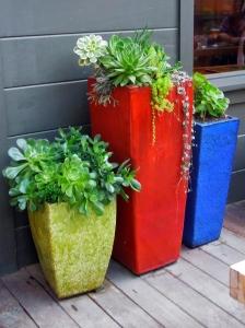 Big Sur Roadhouse Succulents